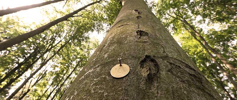 Blick nach oben am Fuße eines Baumgrabs mit Plakette
