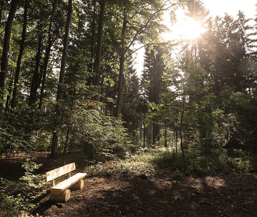 Lichtung mit Holzbank auf dem Waldfriedhof Zwickauer Land