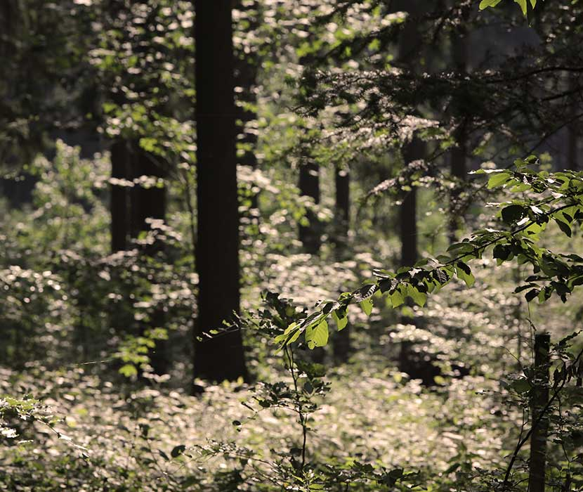 Impression des Waldfriedhofs Zwickauer Land
